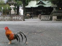 谷保天満宮と鶏