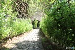 新緑の萩のトンネル