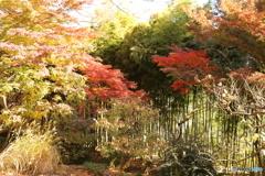 殿ヶ谷戸庭園 秋9