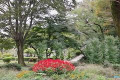 黒鐘公園とサルビア5