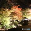 江戸東京たてもの園 ライトアップ 庭