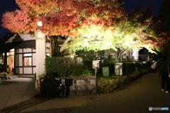 江戸東京たてもの園 ライトアップ 小出邸