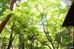 新緑の裏側