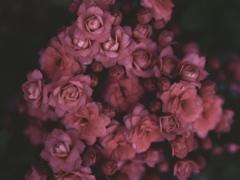 花をみつめる