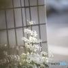 春の花 その2