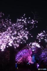 新宿御苑ライトアップ その5