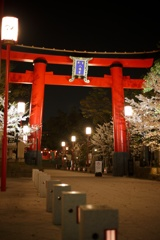 夜桜と富岡八幡
