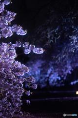 新宿御苑ライトアップ その7
