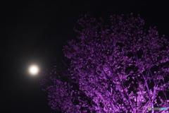 新宿御苑ライトアップ その2
