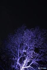 新宿御苑ライトアップ
