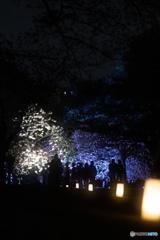 新宿御苑ライトアップ その4