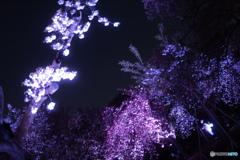 新宿御苑ライトアップ その6