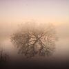 霧の谷中湖