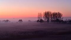 霧の朝渡良瀬