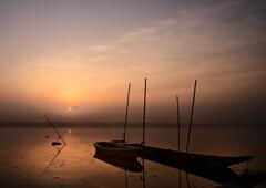 霧の朝Ⅱ渡良瀬