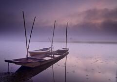 霧の朝 渡良瀬