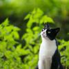 猫のご飯も増税ニャン