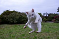 元気な白猫