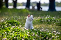 シロツメクサの花が咲いたら~♪