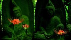 乗蓮寺の曼珠沙華