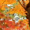 紅葉と芭蕉3