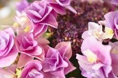 今年も紫陽花