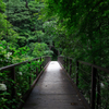 深緑の吊橋