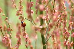 花のはしごを登るてんとう虫