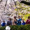 桜には着物が・・・・!