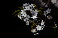 花から葉へ