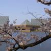 桜と富山県中央植物園
