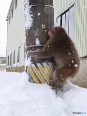 大雪に猿にハートの雪