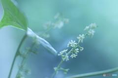 長芋の花っこ