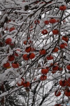 まだ柿の実が残っていた頃2