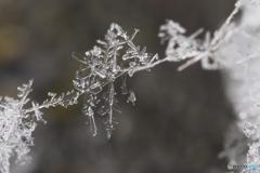 雪の結晶の架け橋