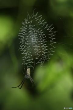 ギザギザのクモの巣
