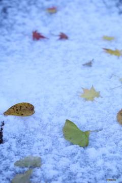 雪に落ち葉2