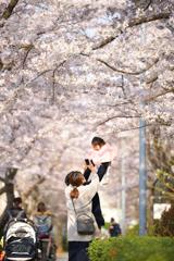 さくら 桜 ソメイヨシノ