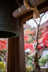 紅葉残る海蔵寺