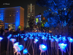 はまこれな風景 Night Sync YOKOHAMA