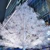 東京ナイト クリスタルツリー