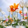 春色・里山ガーデンフェスタ