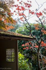 日本の秋・円覚寺