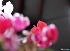 春を迎えに・・!