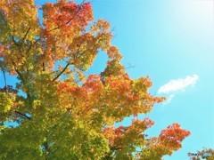 今はもう秋・・