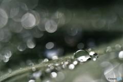 梅雨の日に・・・