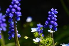 春の賑わい