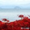 湖岸に咲く曼珠沙華