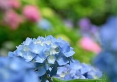 花のように しずかに