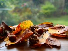 待ち侘びた秋